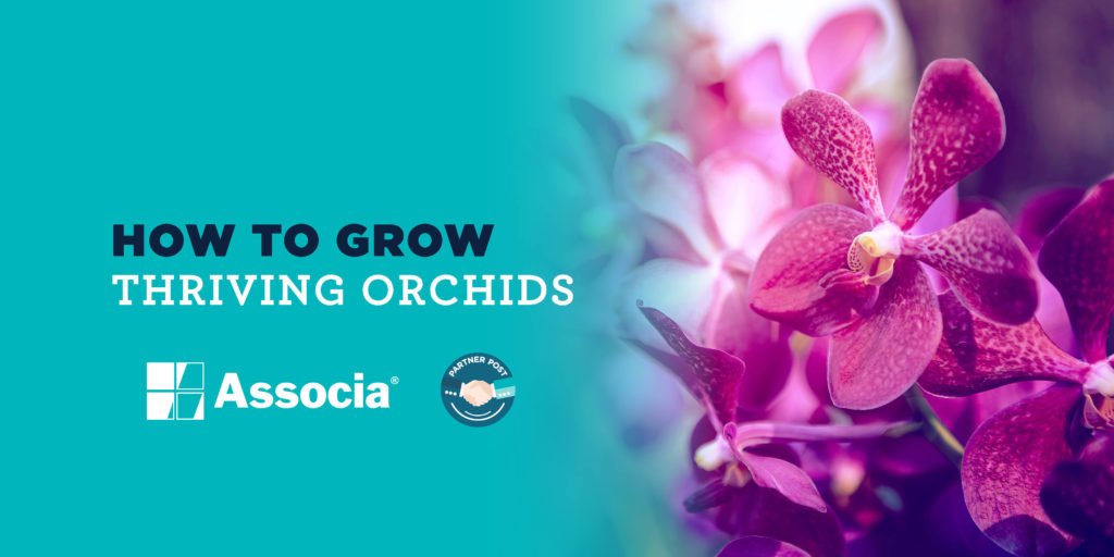 How to Grow Thriving Orchids